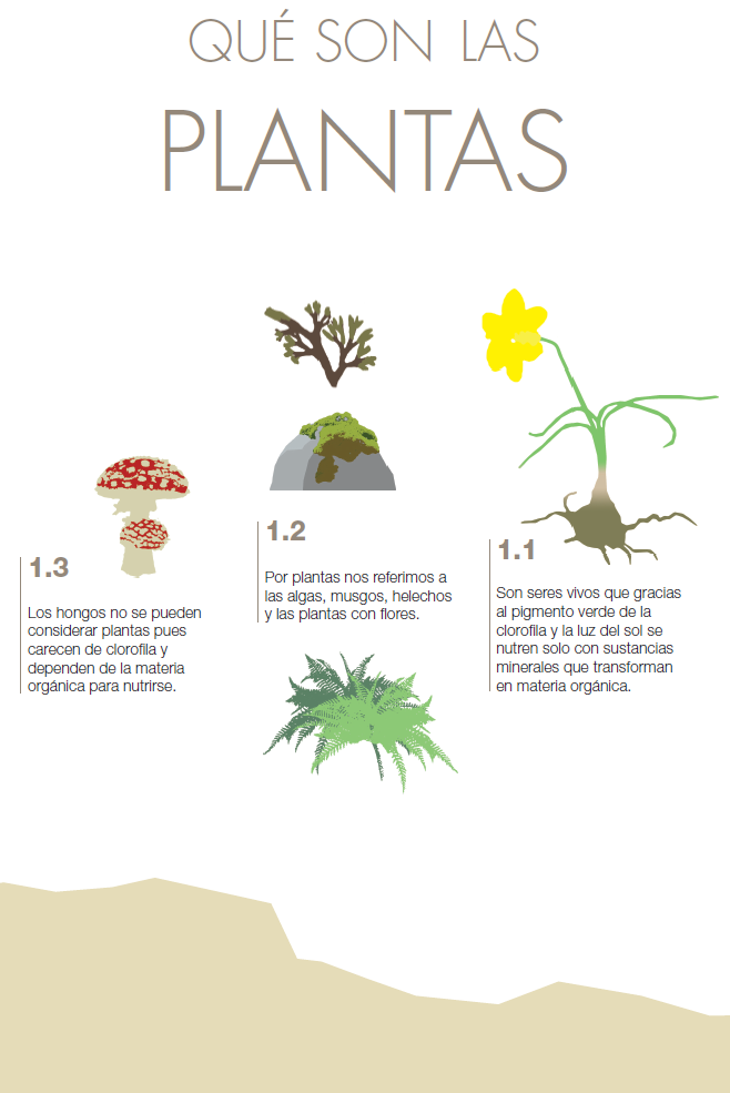 1 qu son las plantas espacio salto de roldan for Todas las plantas son ornamentales